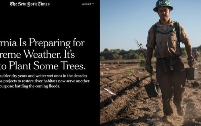 Plantar árboles para prepararse ante un clima extremo