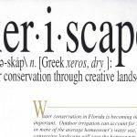 Xeriscape: ahorro de agua con jardinería creativa