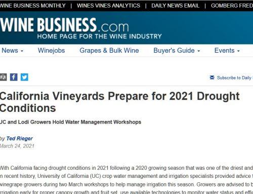 Los viticultores de California se preparan para otra sequía